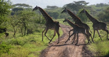 Tanzánia, Zanzibár, Serengeti szafari