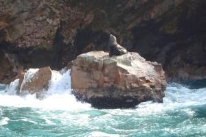 Paracas Nemzeti Park fóka