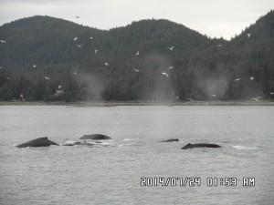 Alaszkai körutazás - Alaszkai hajóút kísérőkkel