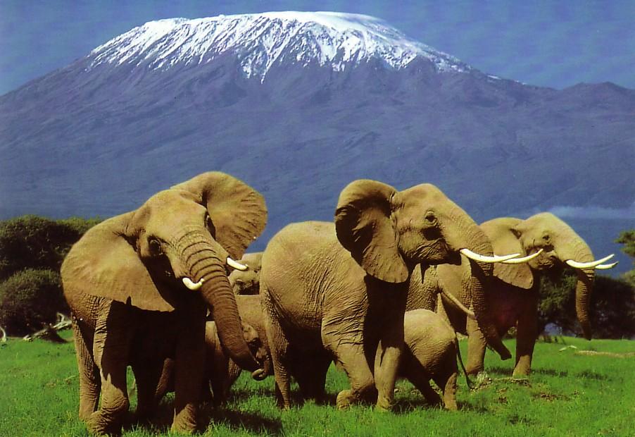 szafari: afrikai szafari serengeti
