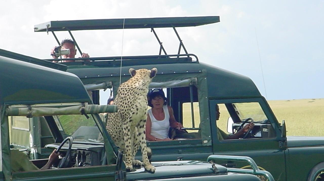 Serengeti szafari: kíváncsi pöttyös vadállat