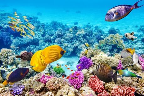 Ausztália körutazás: Ausztrál Nagy korallzátony