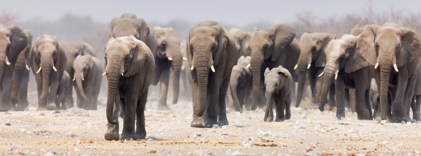 Afrikai szafari - Namíbia, Etosha nemzeti park
