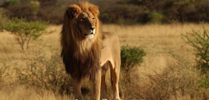 Dél-Afrika körutazás és szafari - Kruger Park