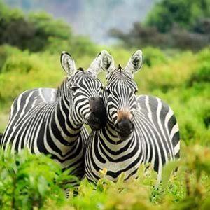 Dél-Afrikai szafari