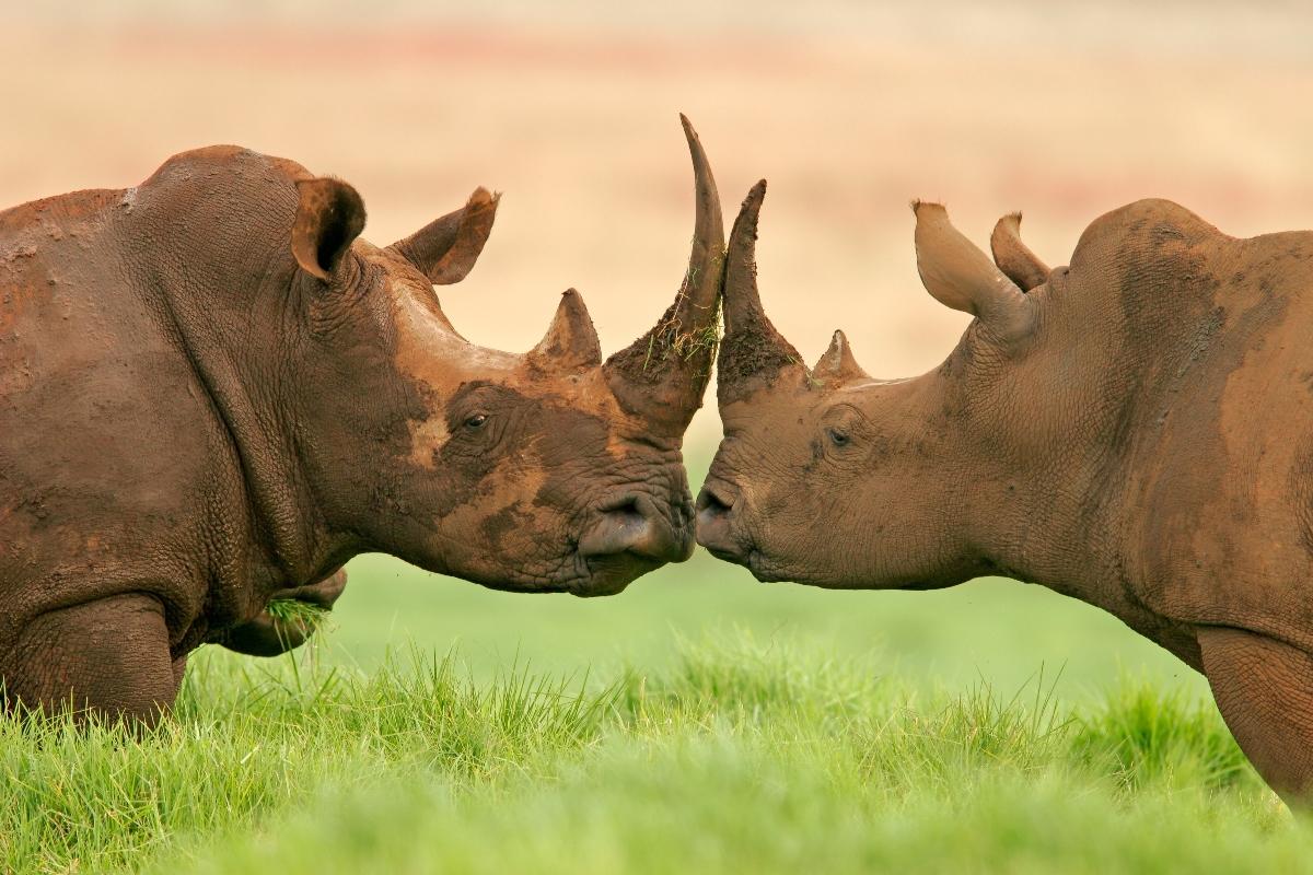 Dél-Afrika szafari