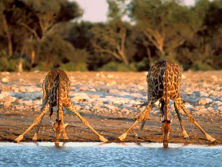 Tanzánia, Zanzibár, Serengeti szafari - Manyara tó